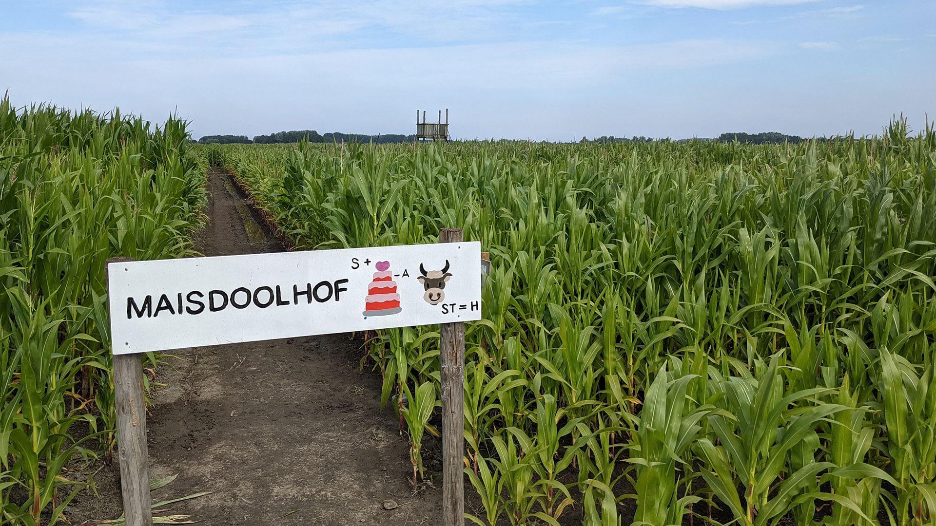 ingang van het maïsdoolhof bij Hoeve Bouwlust in Midden-Delfland