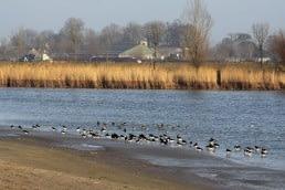 vogelplas kraaiennest Midden-Delfland