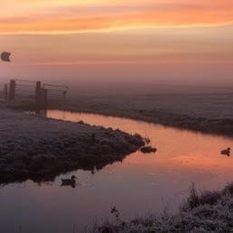 Midden-Delfland uitzicht polder